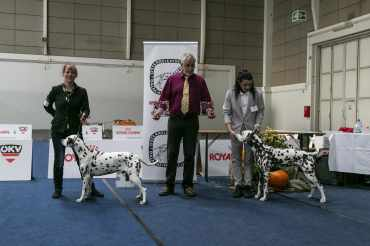 best of breed competition and other pictures (unedited)