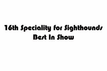 16th Speciality for sighthounds Best In Show (unedited)