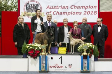Austrian Champion of Champoins 2018